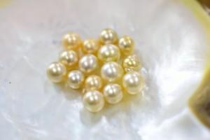 琉球真珠 白蝶真珠 きらびやかで贅沢な輝き