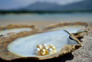 川平湾を背景に、浜揚げしたばかりの白蝶真珠